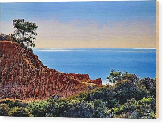 Torrey Pine Look Out Wood Print