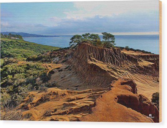Torrey Vista  Wood Print