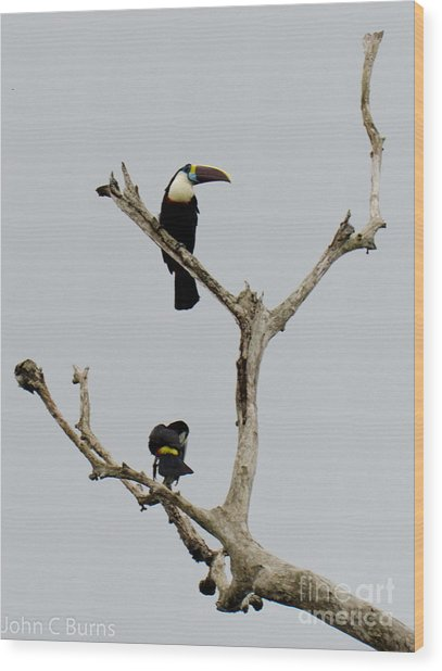 Toucans In The Trees Wood Print