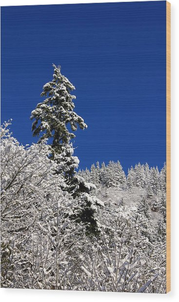 Towering Tree On Snow Covered Mountain Wood Print
