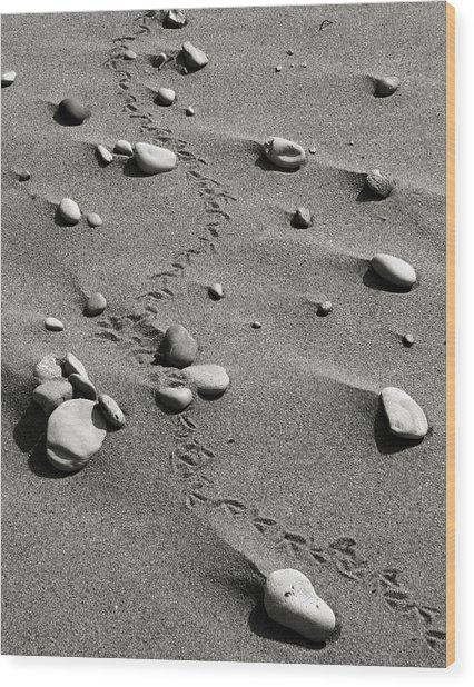 Tracks And Rocks Wood Print by Brady D Hebert