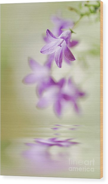 Tranquil Spring Wood Print by Jacky Parker