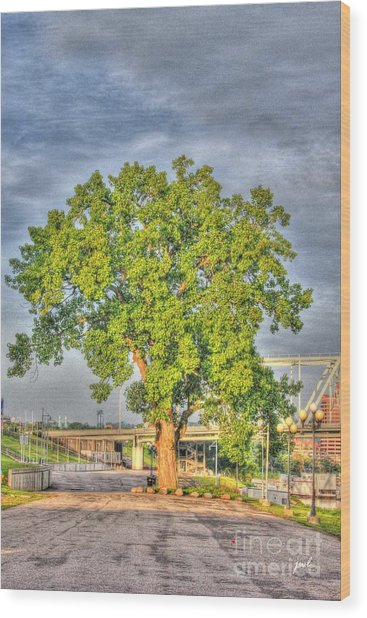Tree At Newport On The Levee Wood Print