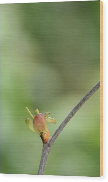 Tree Bud Wood Print