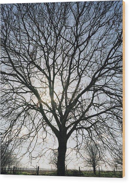 Tree In Silhouette Wood Print by Michael Marten
