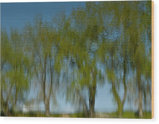 Tree Line Reflections Wood Print