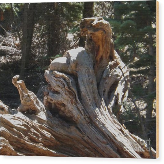 Tree Of Many Faces Wood Print by Gary Brandes
