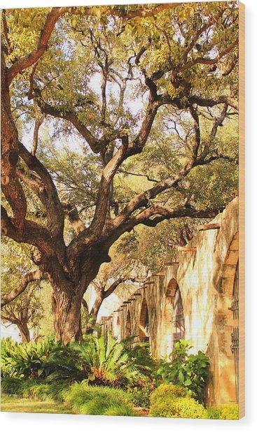 Tree Over Alamo Gardens II Wood Print