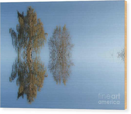 Tree Reflection In Vaerebrovej Wood Print