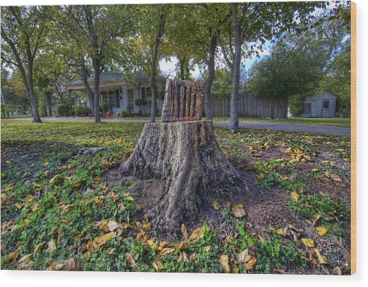 Tree Stump Chair Wood Print By Christopher Smith
