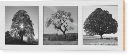 Trees On Canvas Wood Print by Bruno Santoro