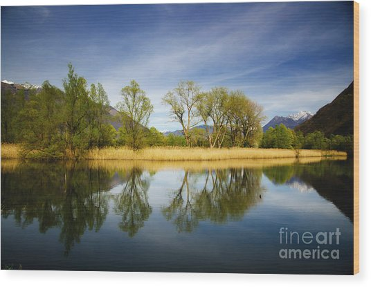 Trees Reflections On The Lake Wood Print