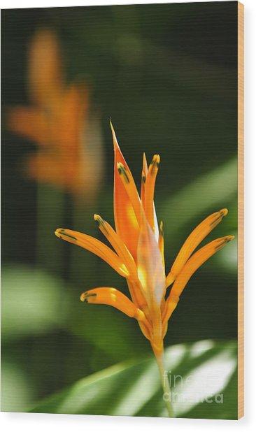 Tropical Orange Heliconia Flower Wood Print