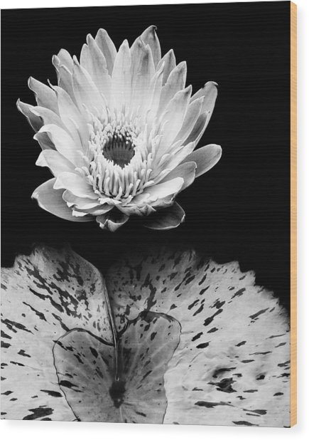 Tropical Water Lily In Black And White Wood Print