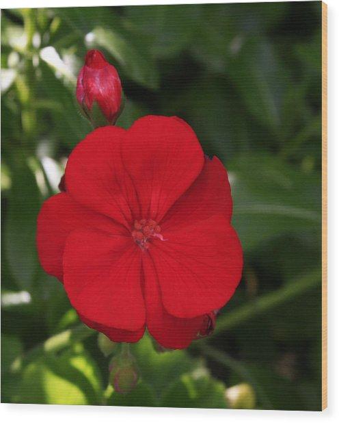 True Red Wood Print