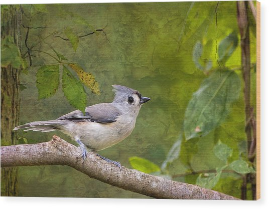 Tufted Titmouse In The Forest Wood Print by Bonnie Barry