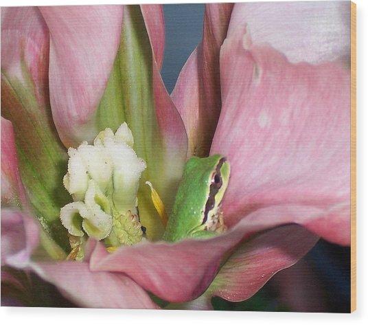 Tulip Frog Wood Print