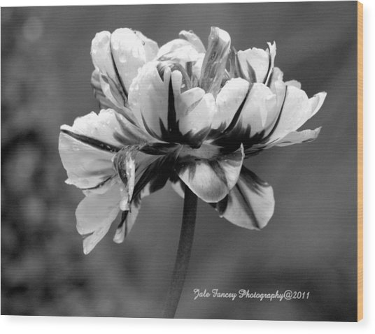 Tulip In Black And White Wood Print