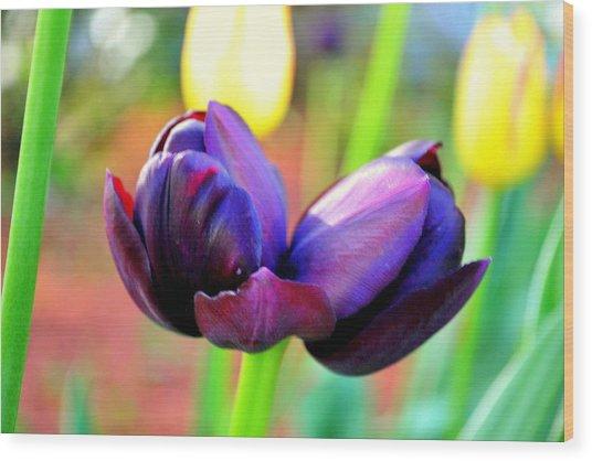 Tulip Twins Wood Print