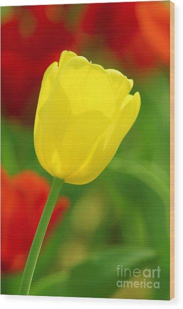 Tulipan Amarillo Wood Print
