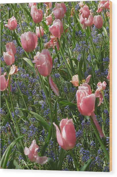 Tulips And Grape Hyacinth Wood Print
