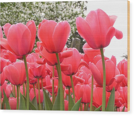 Tulips Wood Print by Andrea Drake