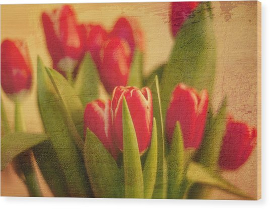 Tulips Wood Print by Paul Davis