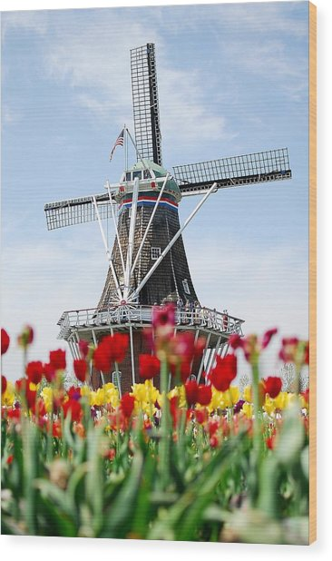 Tulips Windmill Wood Print