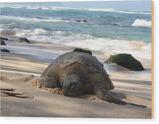 Turtle Beach Wood Print by Natalija Wortman