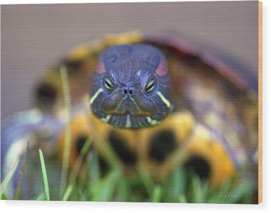Turtle Beauty Wood Print
