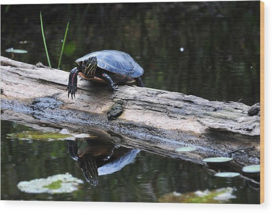 Turtle Reflected Wood Print