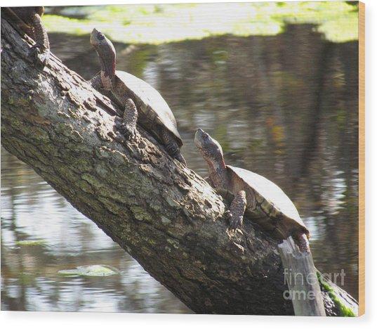 Turtles On The Move Wood Print