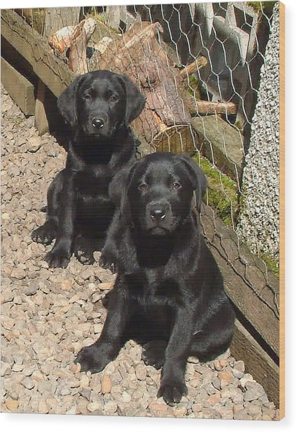 Twin Black Labrador Puppies Wood Print