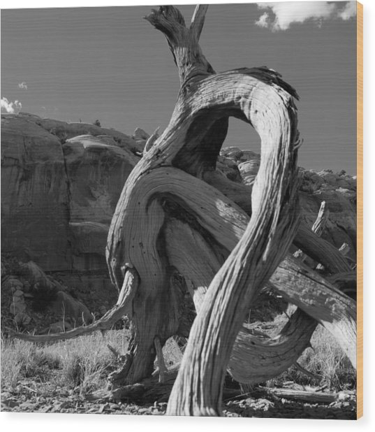 Twisted Root Wood Print by Dale Davis