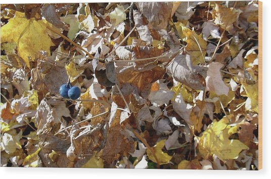 Two Blue Berries Wood Print by Mike Stouffer