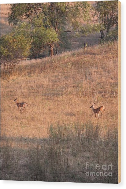 Two Bucks On The Run Wood Print by Yumi Johnson