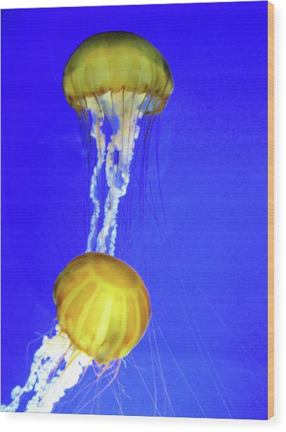 Two Gold Jellys Wood Print