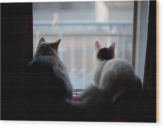 Two Munchkin Cats Wood Print