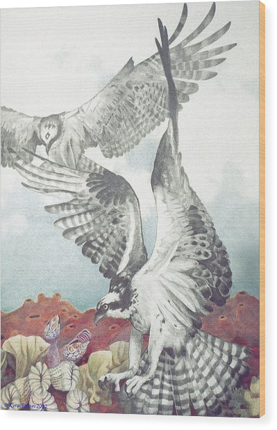 Two Ospreys Wood Print