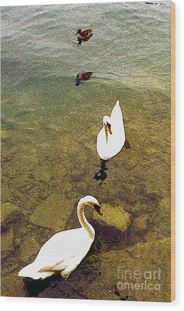 Two Pairs Of Swans And Ducks Wood Print by Merton Allen