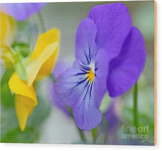 Two Pansies Ln Love Wood Print
