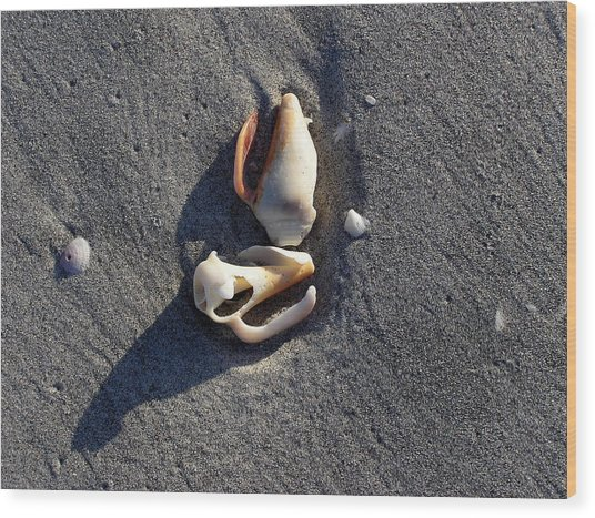 Two Shells On The Beach Wood Print