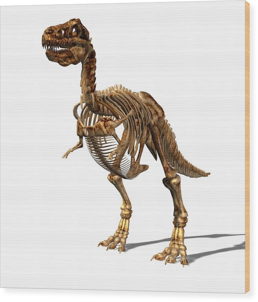 Tyrannosaurus Rex Dinosaur Wood Print by Friedrich Saurer