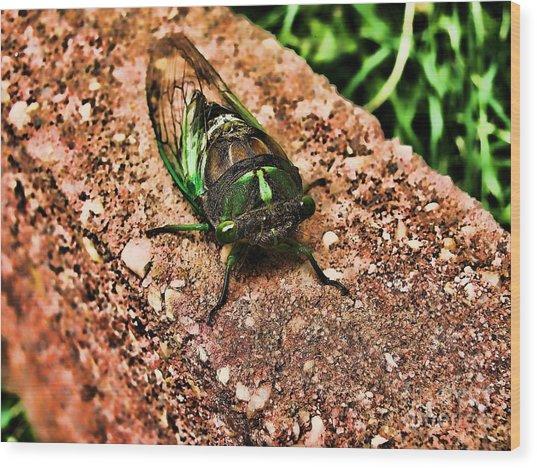 Ugh A Bug Wood Print by Colleen Kammerer