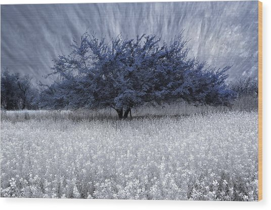 Unbelievable Wood Print