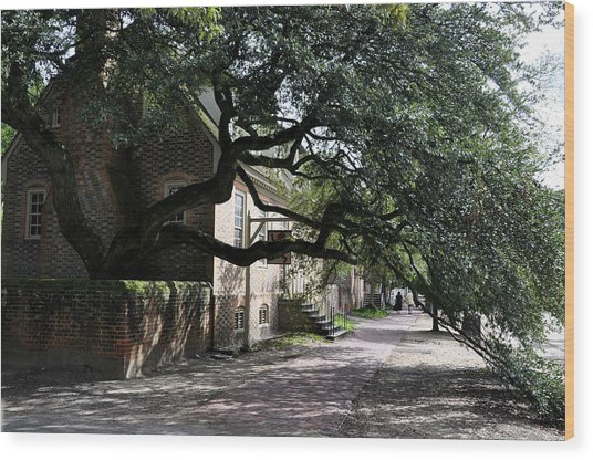 Wood Print featuring the photograph Under The Tree In Williamsburg by Rosemary Legge