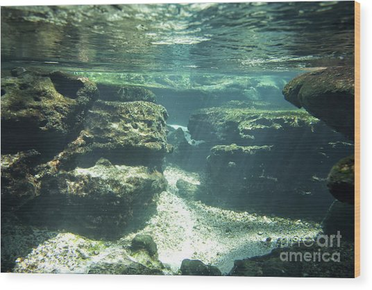 Underwater Stream In Central Florida Wood Print by Christopher Purcell