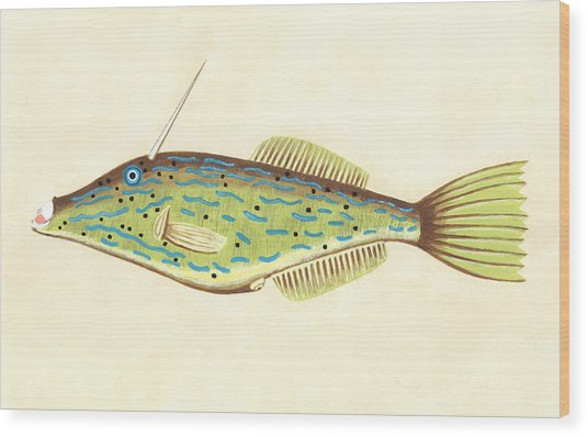 Unicorn Fish Wood Print