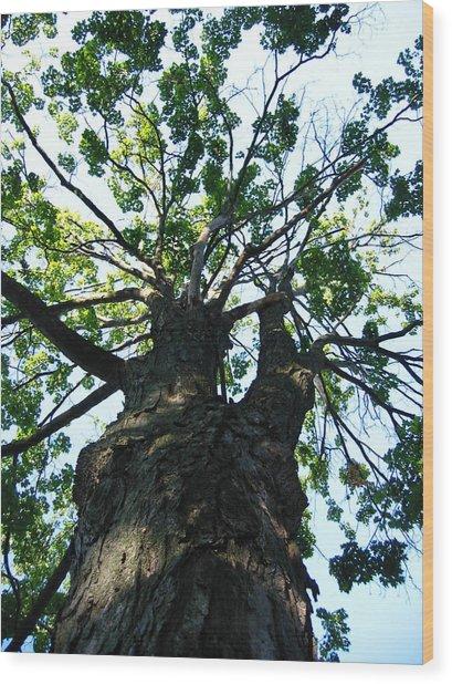 Up A Tree Wood Print
