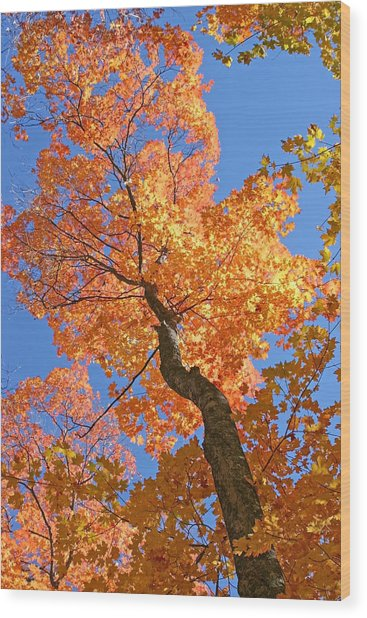 Up And Up Wood Print by Sharon I Williams